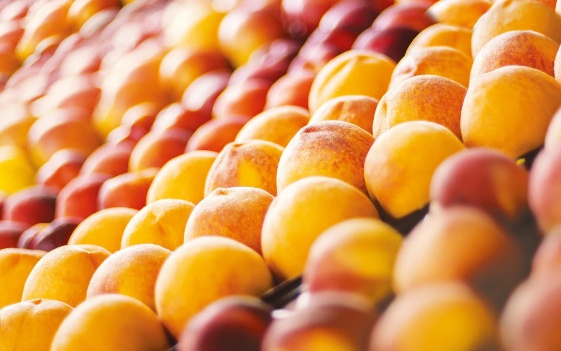 Il frutto protegge il seme. Noi proteggiamo il frutto